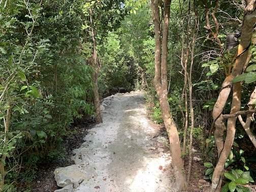 Canopied-path