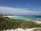 Whelk Cay