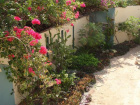 5a Bougainvillea Wall 23