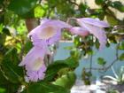 8a Orchid garden 96